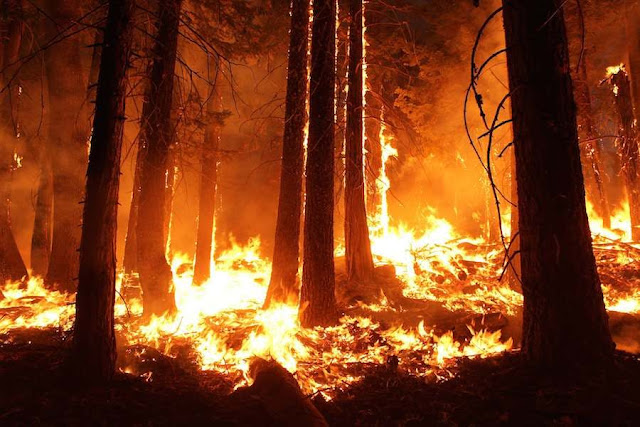 Global warming is the kindling that caused extensive wildfire