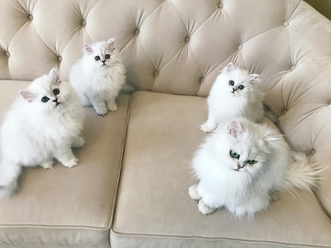 Kissoja Myytävänä