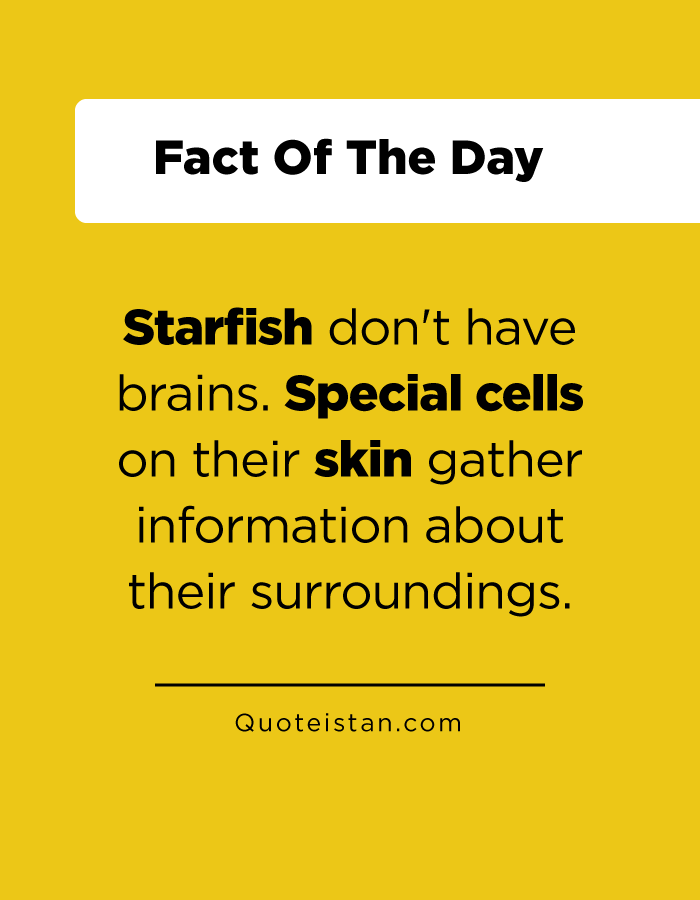 Starfish don't have brains. Special cells on their skin gather information about their surroundings.