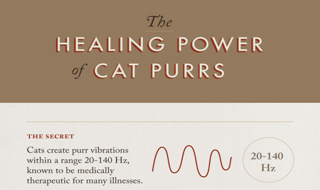 Cat's healing strength rumbles #infographic