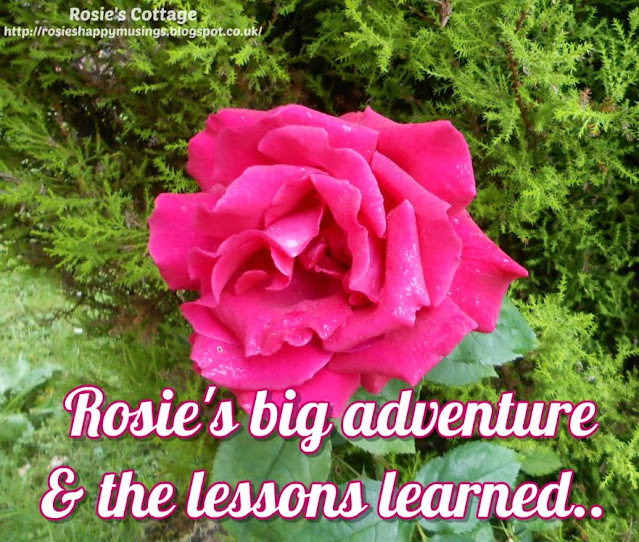 Rosie's adventure and the lessons learned by a spoonie on her first trip outside in 8 months!