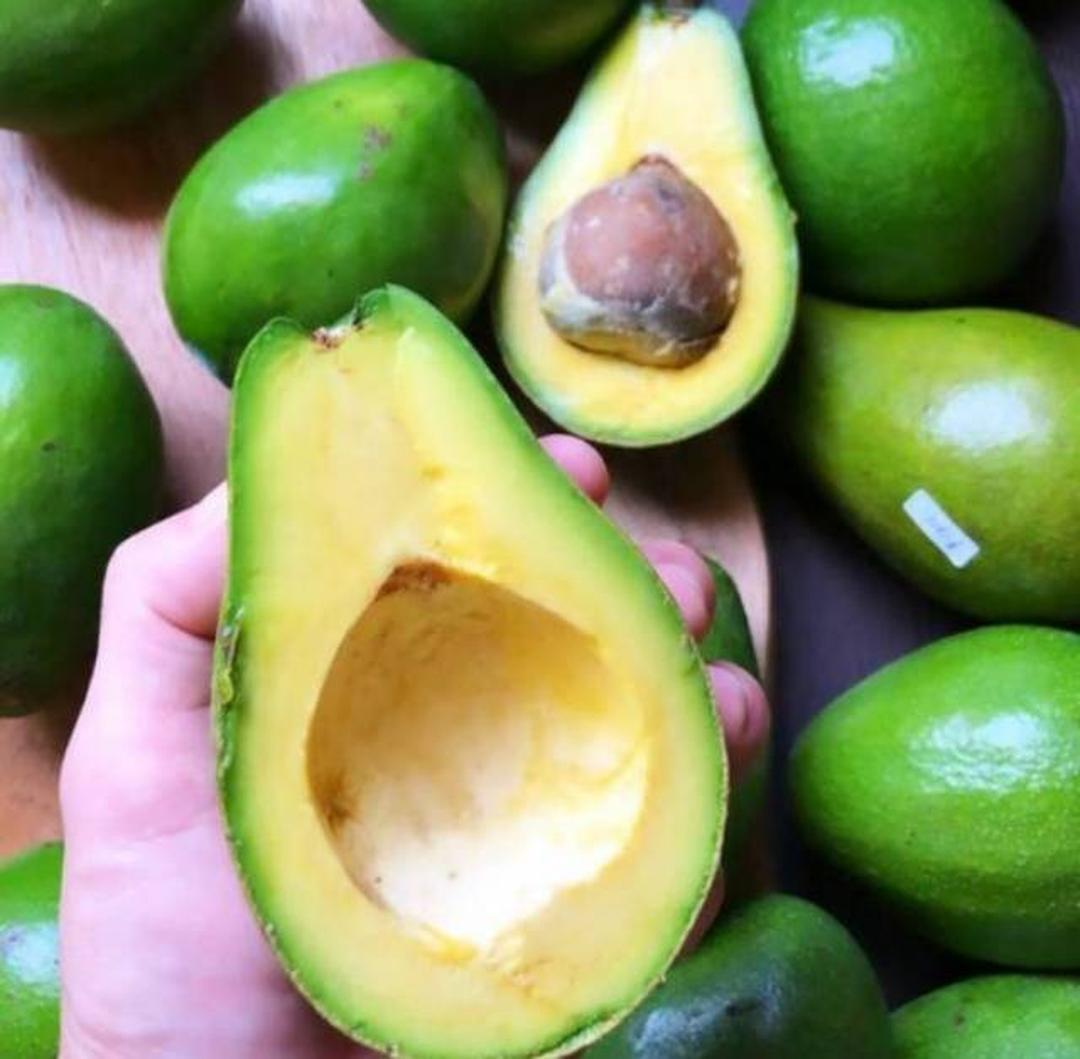 Stok melimpah! bibit tanaman alpukat mentega jumbo super buah mencapai 2kg COD Kota Bandung #bibit