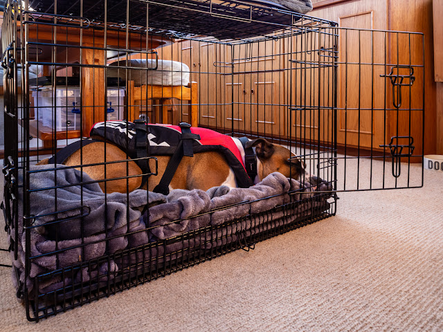 Photo of Ruby laying in her cage ready to go home