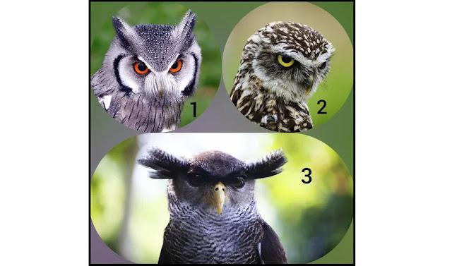 Тест предсказание: выберете сову и узнайте, что вас ждет! Фото эмоции успехи Отношения необычное любовь