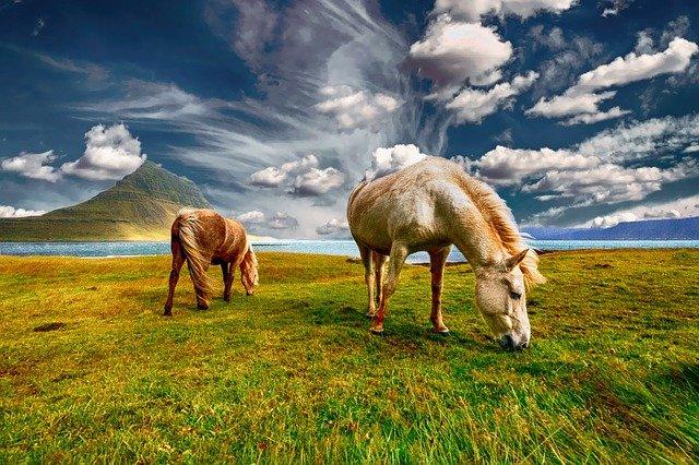 50 Interesting facts about horse। घोड़ों के बारे में दिलचस्प रोचक तथ्य