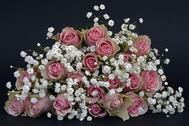 gambar bunga mawar cantik wallpaper