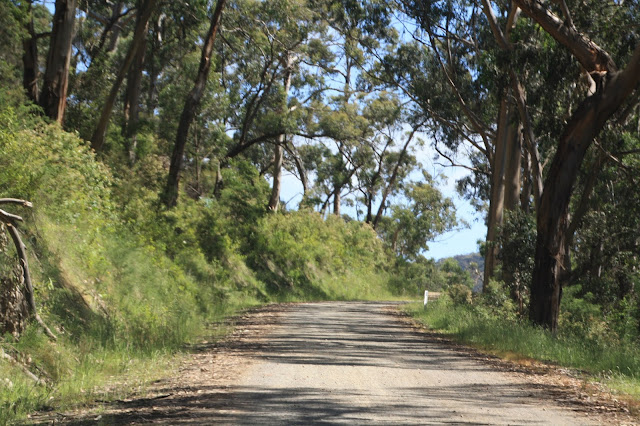 Grey River Road gravel road through forest