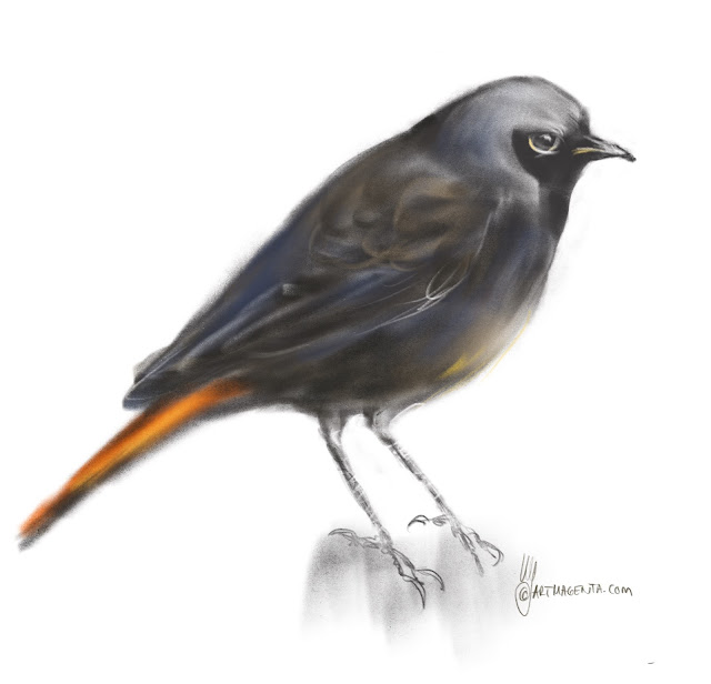 Black Redstart Bird painting by Artmagenta