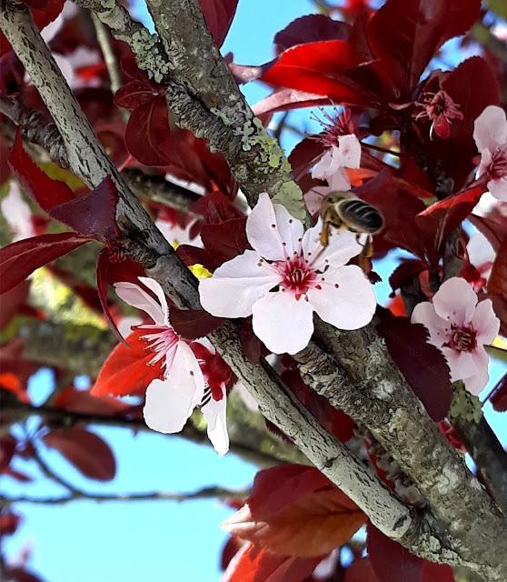 abelha na primavera - a bella e o mundo