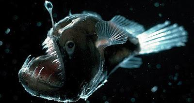 AnglerFish Laut Dalam