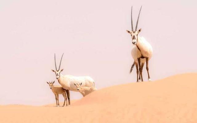 Why a Desert Safari Should Be on Your Dubai To-do List