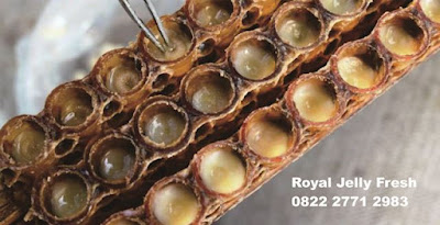 beli royal jelly di surabaya,jual royal jelly asli di surabaya,jual royal jelly di surabaya,jual royal jelly surabaya,madu royal jelly surabaya,royal jelly di surabaya,royal jelly hd surabaya,royal jelly jafra surabaya,royal jelly surabaya,beli royal jelly di surabaya,jual royal jelly asli di surabaya,jual royal jelly di surabaya,jual royal jelly surabaya,madu royal jelly surabaya,royal jelly di surabaya,royal jelly hd surabaya,royal jelly jafra surabaya,royal jelly surabaya,beli royal jelly di surabaya,jual royal jelly asli di surabaya,jual royal jelly di surabaya,jual royal jelly surabaya,madu royal jelly surabaya,royal jelly di surabaya,royal jelly hd surabaya,royal jelly jafra surabaya,royal jelly surabaya,beli royal jelly di surabaya,jual royal jelly asli di surabaya,jual royal jelly di surabaya,jual royal jelly surabaya,madu royal jelly surabaya,royal jelly di surabaya,royal jelly hd surabaya,royal jelly jafra surabaya,royal jelly surabaya,beli royal jelly di surabaya,jual royal jelly asli di surabaya,jual royal jelly di surabaya,jual royal jelly surabaya,madu royal jelly surabaya,royal jelly di surabaya,royal jelly hd surabaya,royal jelly jafra surabaya,royal jelly surabaya,beli royal jelly di surabaya,jual royal jelly asli di surabaya,jual royal jelly di surabaya,jual royal jelly surabaya,madu royal jelly surabaya,royal jelly di surabaya,royal jelly hd surabaya,royal jelly jafra surabaya,royal jelly surabaya