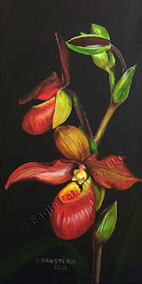 Red Phragmipedium Painting