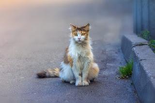 ¿Cómo pueden los gatos encontrar el camino a casa si se pierden?