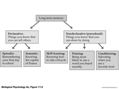 associative learning psychology examples of dual relationship
