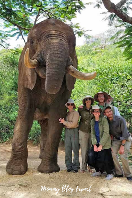 African Family Elephant Safari