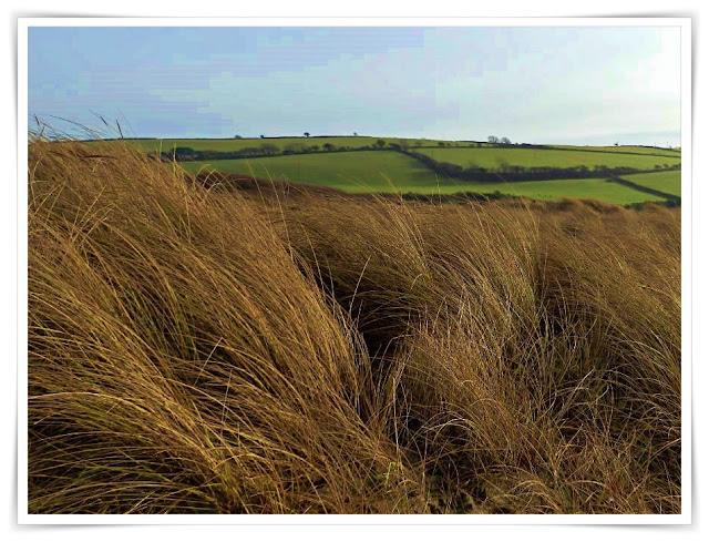 Grasses on the sand dunes at Par, Cornwall