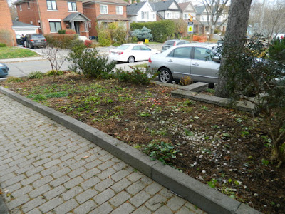 Bedford Park Toronto Fall Front Yard Cleanup After by Paul Jung Gardening Services Inc.--a Toronto Gardening Company