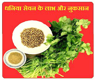 Benefits and disadvantages of consuing coriander seeds