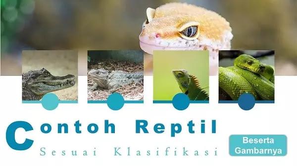 Contoh gambar reptil