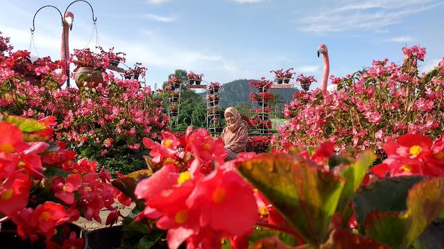 Fasilitas yang Ada di Kebun Begonia Lembang