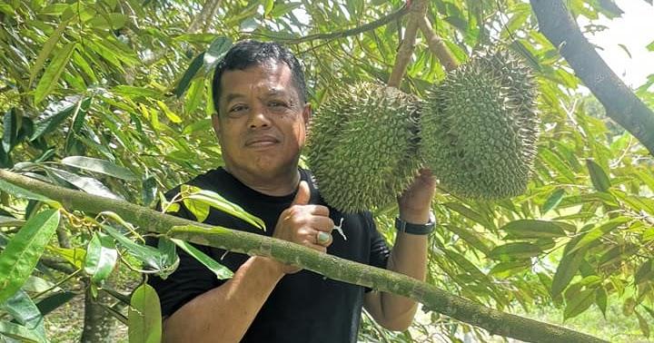 Berita TV Malaysia: Ada tak peminat bibit durian Musang
