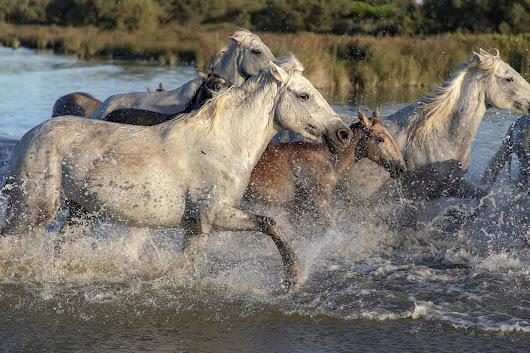 أجمل صور خلفيات خيول 8