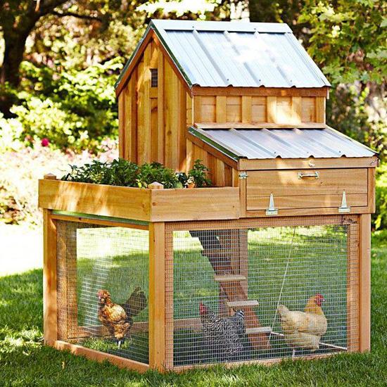 Idea Bina Reban Ayam Menarik