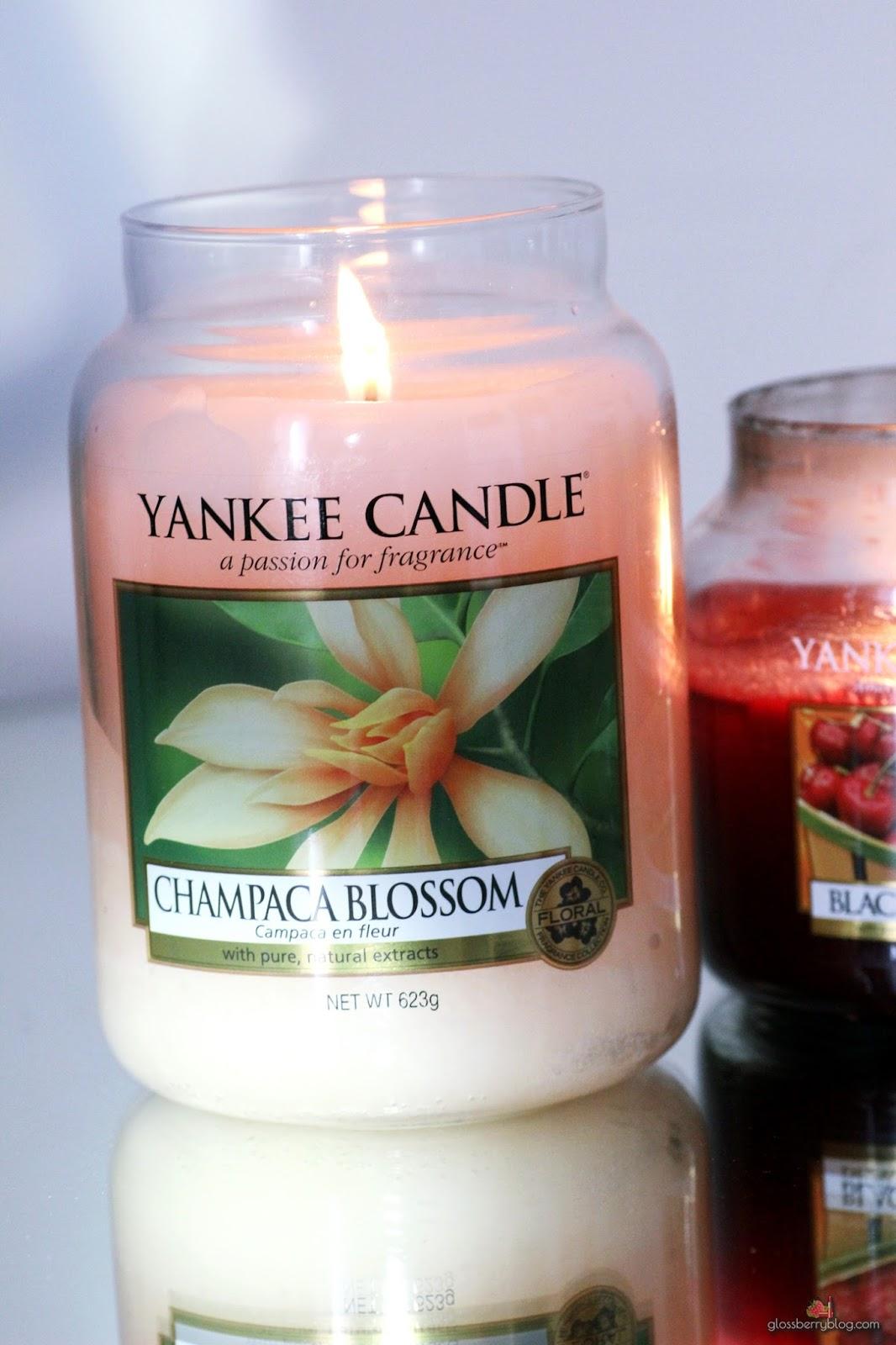 yankee candles review champaca blossom plum נרות יאנקי סקירה ינקי ביקורת ריחות גלוסברי בלוג איפור וטיפוח