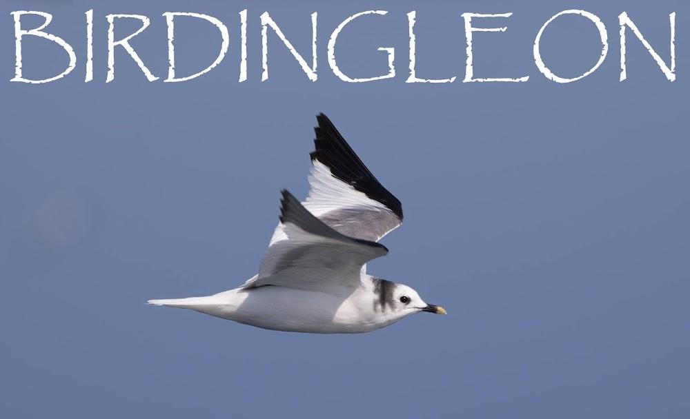 BIRDINGLEON