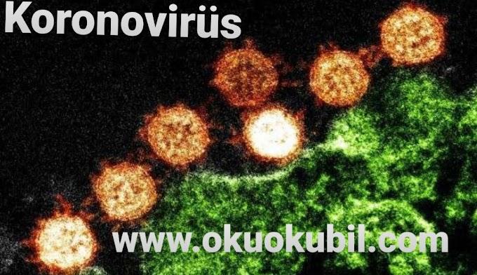 Koronovirüs Nedir Nerde Görülmüştür - Wuhan koronavirüsünün neden olduğu belirtiler nelerdir?