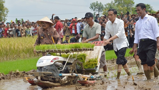 Dalam 4 Tahun Pemerintahan Jokowi-JK, Mampu Swasembada Pangan