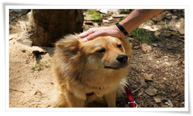 dog training,puppy training,puppy training basics,training,dog training mistakes,puppy training tips,dog training tips,professional dog training,puppy training videos,dog training videos,online dog training,puppy training 101,dog training 101,mistakes in dog training,mistakes when training dogs,common dog training mistakes,avoid mistakes in dog training,puppy training first week,puppy training schedule,clicker training,mistake,dog training advice