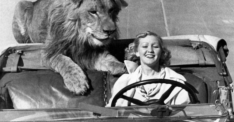 24 Bizarre Vintage Photos of People and Their Pet Lions