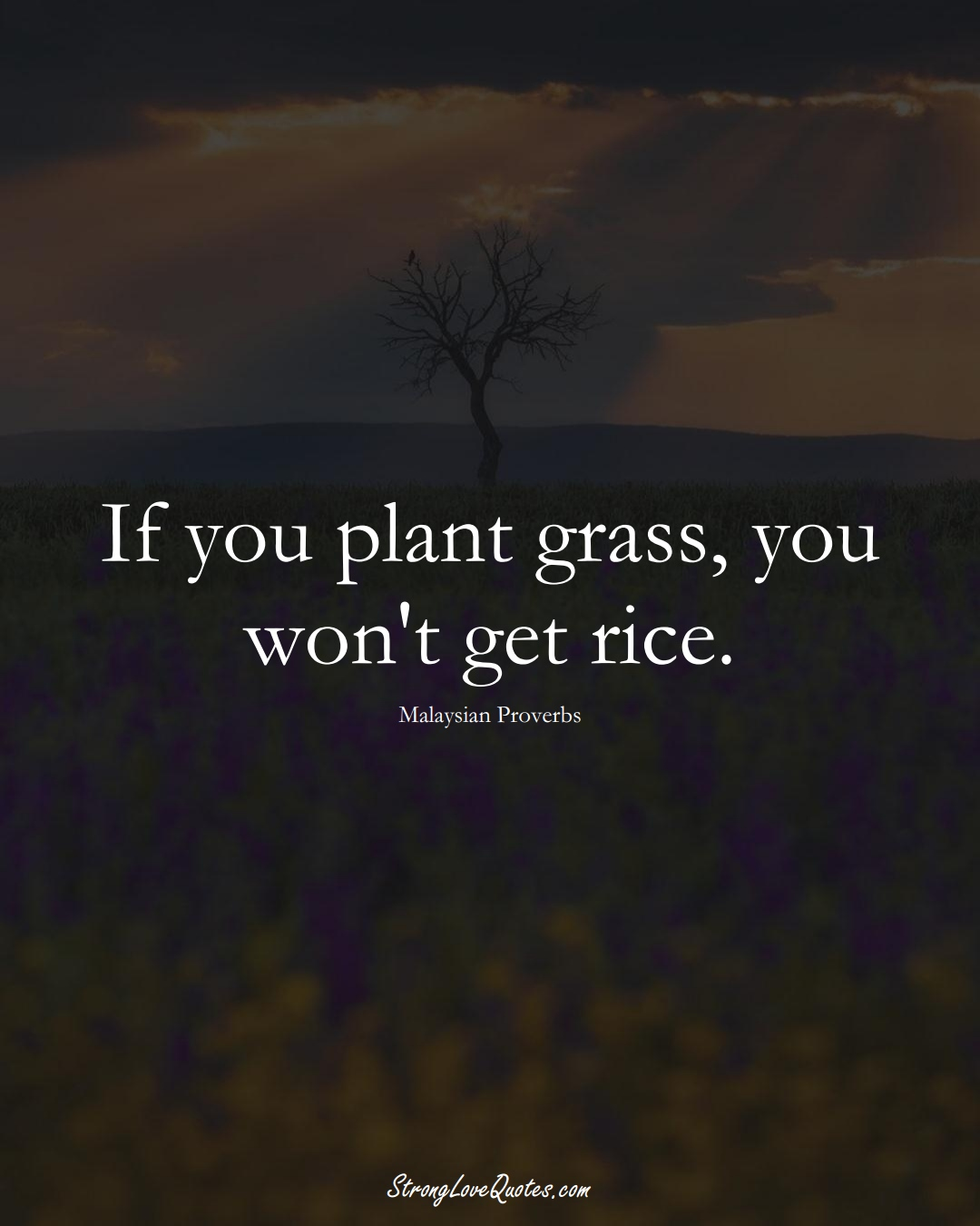 If you plant grass, you won't get rice. (Malaysian Sayings);  #AsianSayings