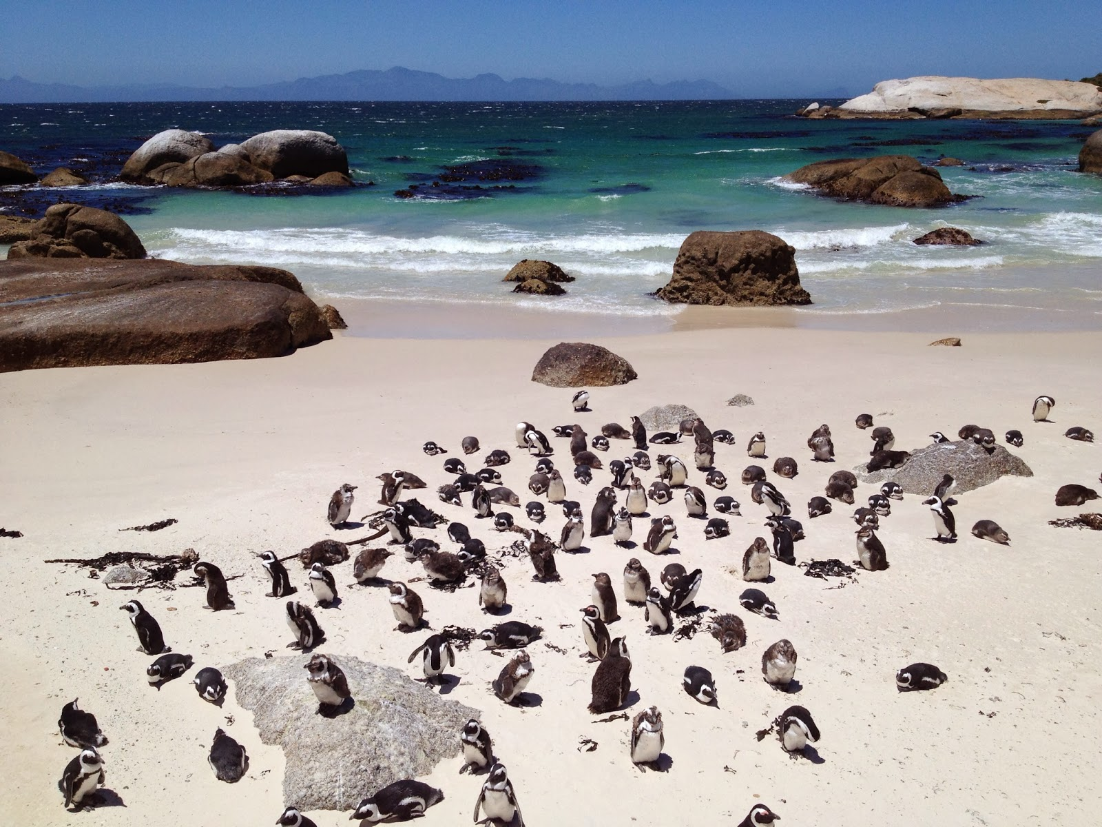 Cape Point Tour - Penguins at Boulders Beach