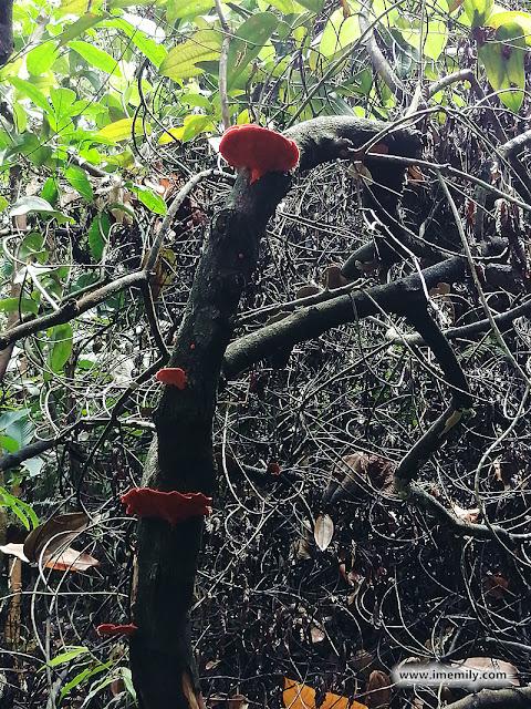 Flora & Fauna in Gasing Hill, PJ