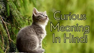 Curious Meaning In Hindi