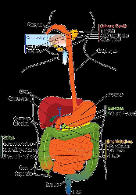 Dizionario Del Benessere Vitale Funzione Del Pancreas Piccoli Disturbi E Cure