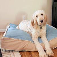http://translate.googleusercontent.com/translate_c?depth=1&hl=es&rurl=translate.google.es&sl=en&tl=es&u=http://fabyoubliss.com/2012/04/19/do-you-love-your-fur-baby-as-much-as-i-love-mine-then-make-a-new-dog-bed-for-them/&usg=ALkJrhhdBWkwyI1v-4fBbSk51dWcb-oyEA