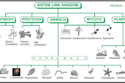 Klasifikasi Makhluk Hidup : Pengertian, dan Tingkatan