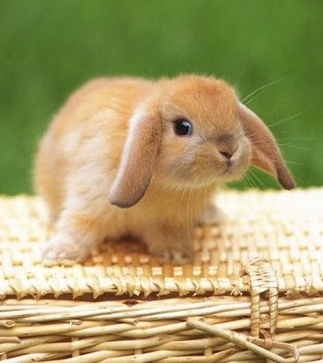 ¡No más experimentación animal en cosmética! - Blog de Belleza Cosmetica que Si Funciona
