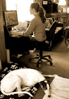 Kura hard at work in the home office while Dana patiently waits for her walk