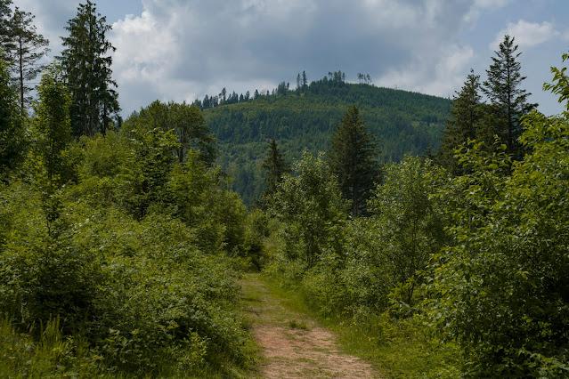Premiumwanderweg Murgleiter | Etappe 5 von Baiersbronn zum Schliffkopf | Wandern nördlicher Schwarzwald 17
