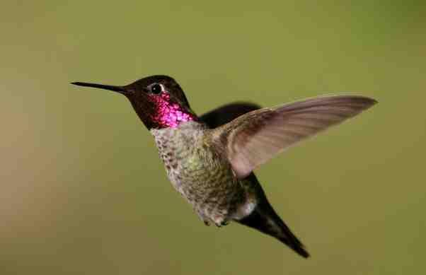 بالفيديو طائر يغير لونه كل ثانية