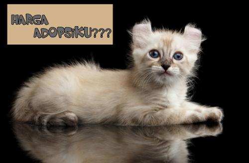 Kucing American Curl Murah