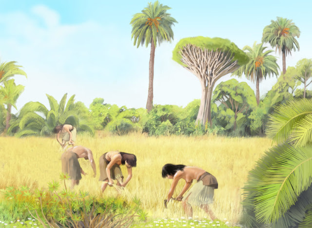 The vegetation of Gran Canaria changed after the arrival of humans