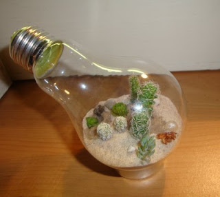 http://www.stormthecastle.com/terrarium/desert-terrarium-inside-a-lightbulb.htm