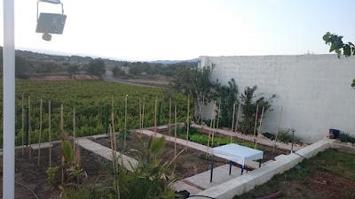 Anläggning av köksträdgård