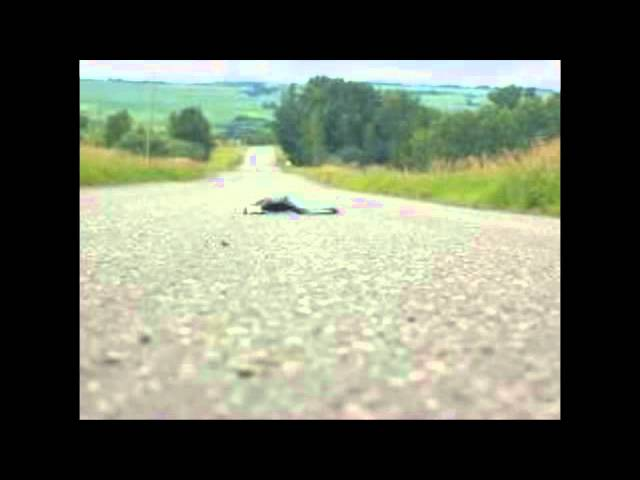 Dead Skunk In The Middle Of The Road Lyrics